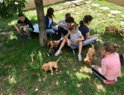 Zöldmáli Kids Camp