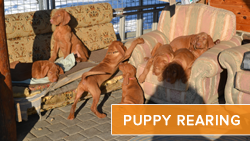 Puppy Rearing