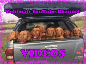 Zoldmali Videos